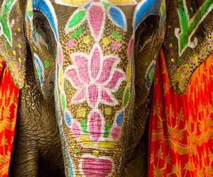animal, elephant, and painted image