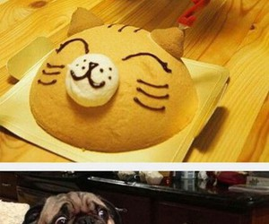 birthday, cute, and pets image