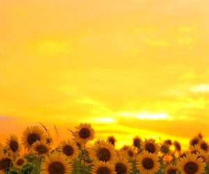 flower, flowers, and orange image