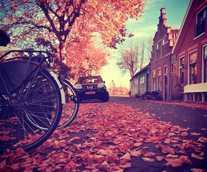 autumn, colors, and photo image