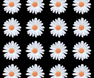 flowers, black, and daisy image