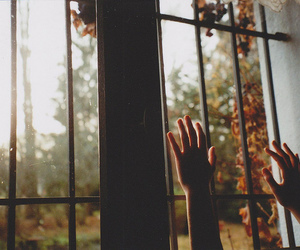 hands, autumn, and fall image