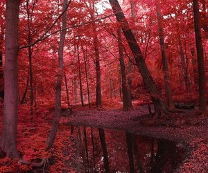 nature, red, and forest image