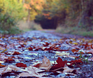 autumn, path, and colors image