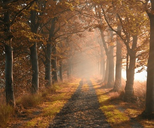 path and trees image