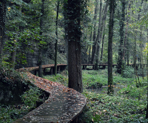forest, green, and path image