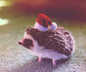 animal, christmas, and cute image