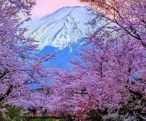 japan, pink, and beautiful image