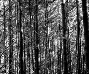 black, forest, and stripes image