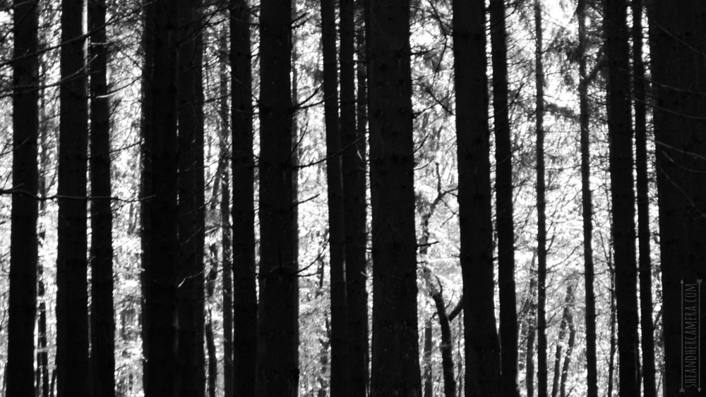 black, stripes, and forest image