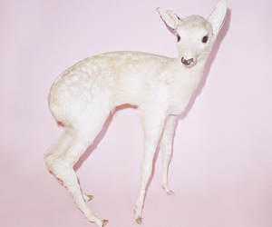 pink, cute, and bambi image