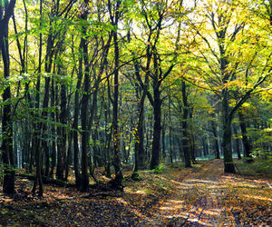autumn, forest, and path image