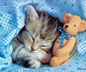 blue, cute, and kitten image