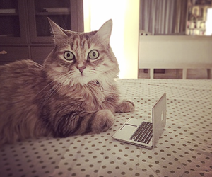 cat, chat, and computer image