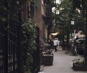 street, city, and tree image