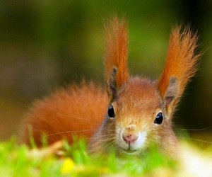 funny, squirrel, and esquilo image