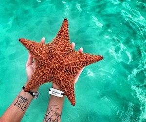 starfish, summer, and water image