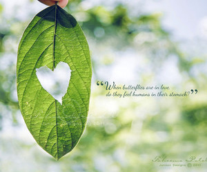 butterfly, green, and heart image
