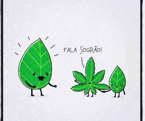 suegro, weed, and marijuana image
