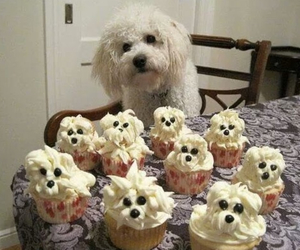 cakes, dog, and food image