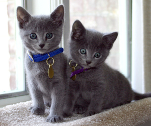kittens, cat, and cute image