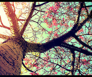 tree and flowers image
