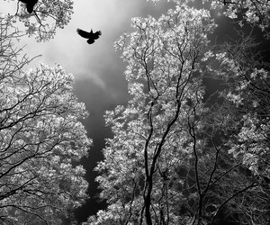 b & w, inspiration, and trees image