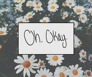 daisy, flowers, and oh image