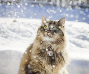 cat, snow, and winter image