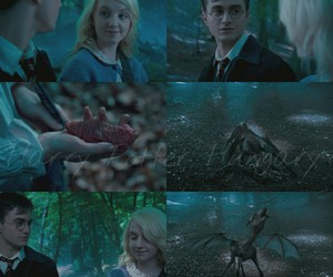 blue, luna lovegood, and forest image