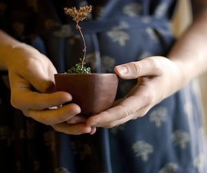 plant and hands image