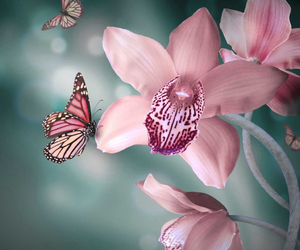 butterfly, color, and nature image