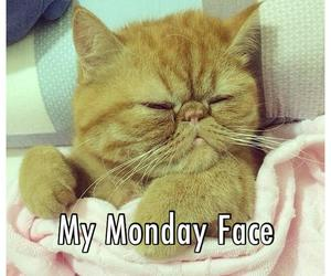 cat, monday, and face image