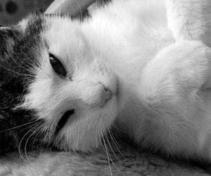cat, cute, and photo image