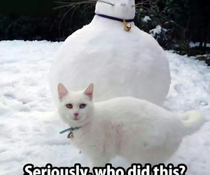 cat, funny, and pets image