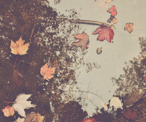 autumn, leaves, and dreamy image