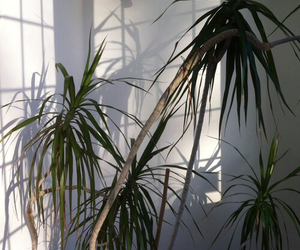 plants, pale, and green image
