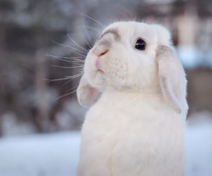 bunny, photography, and rabbit image