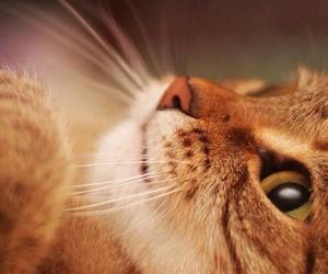 cat, beautiful, and animal image