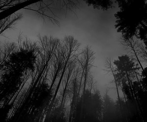 black, forest, and dark image