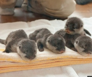 otter, baby, and funny image