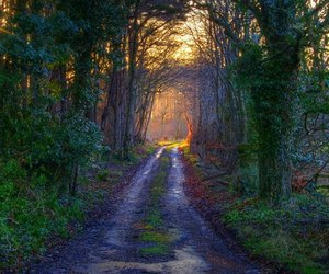 arvores, trees, and colors of nature image