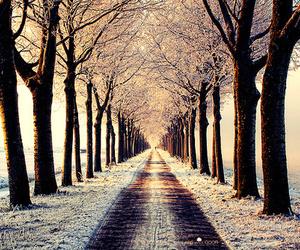 christmas, season, and winter image
