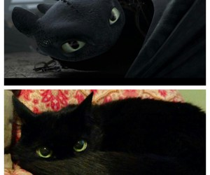 cat, dragon, and funny image