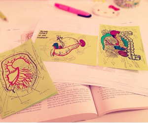 anatomy, studying, and med student image