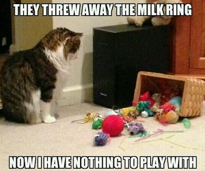 cat, funny, and nothing image