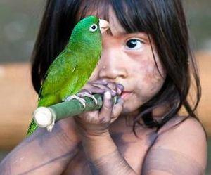 bird, native, and brazil image