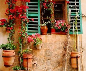 flores, flowers, and spain image