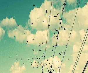birds, free, and clouds image