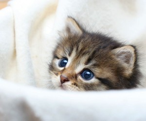 cat, sweet, and kitten image